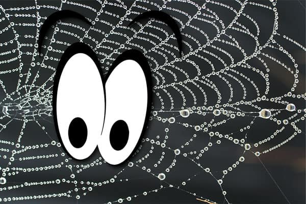 Two smiling cartoon eyes layered on top of spider web covered in dew.