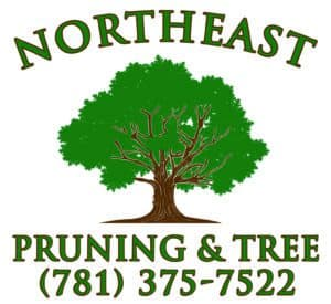 Northeast Pruning and Tree logo.